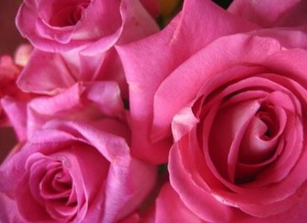 Róża wsławiła się na przestrzeni wieków jako roślina lecznicza