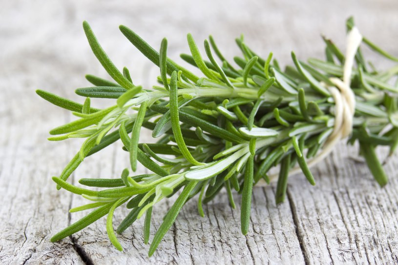 Rozmaryn to niezwykłe zioło /©123RF/PICSEL