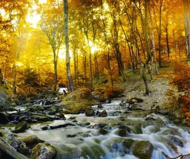 Roztoczańskie szumy - nasz nowy cud natury