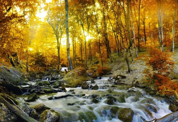 Roztoczańskie wodospady znalazły się na liście nowych cudów Polski /123/RF PICSEL