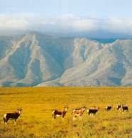 RPA, Narodowy Park Bentebok /Encyklopedia Internautica