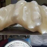 Rybak wyłowił największą perłę świata… i przez 10 lat trzymał ją jako pamiątkę