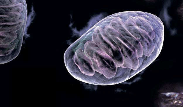 Rybosomy i mitochondria / inf. prasowa /&nbsp