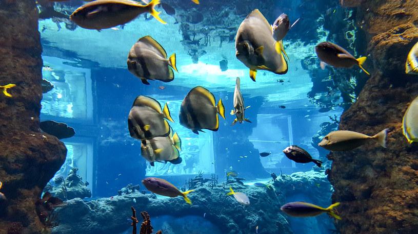 Ryby z basenu Morza Czerwonego /Styl.pl
