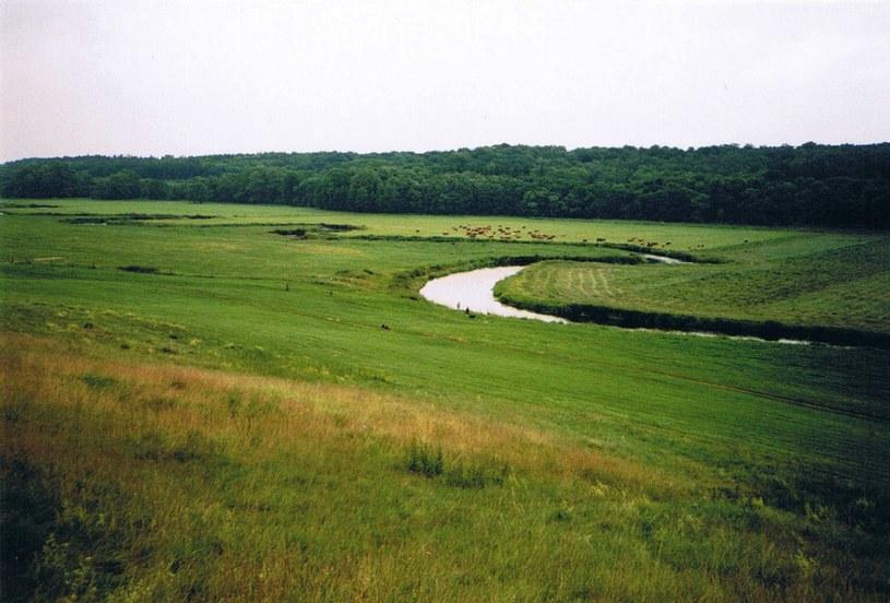 Rzeka Tollense w okolicy pobojowiska /Wikipedia /materiały prasowe