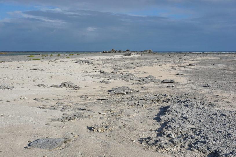 Sable Island to łacha piasku, która nieprzerwanie wędruje po chłodnych wodach Atlantyku /123RF/PICSEL