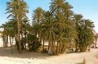 Sahara, oaza niedaleko Douz, Tunezja /Encyklopedia Internautica
