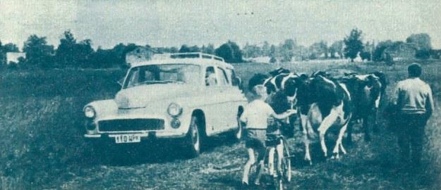 Samochód 203 K jest uniwersalnym środkiem transportowym. /Motor