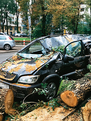 samochód uszkodzony przez drzewo /Motor