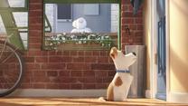"""""""Sekretne życie zwierzaków domowych"""" [trailer 3]"""