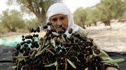 Sezon na oliwki