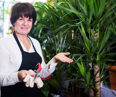 Siedem błędów, jakie popełniamy przy hodowli palm
