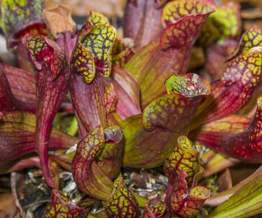 Siedem roślin domowych, które zabiorą cię w podróż dookoła świata