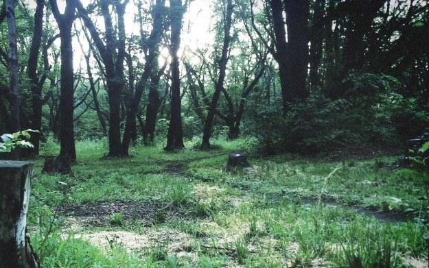 Silent Hills /materiały prasowe
