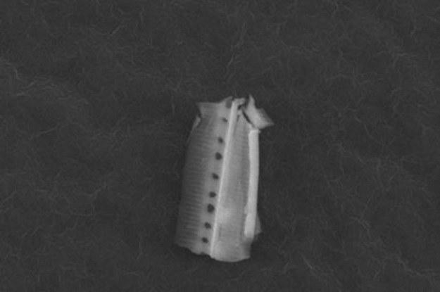 Skąd wzięły się okrzemki w stratosferze? Pochodzą z Ziemi czy z kosmosu? (Fot. University of Sheffield) /materiały prasowe