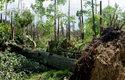 Jak podali leśnicy, w ciągu kilkunastu minut trąba powietrzna zniszczyła 1500 ha lasów, w tym 800 ha doszczętnie