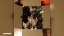 Słodka gromada kociaków czeka na nowy dom