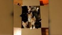 Słodkie kociaki czekają na swój nowy dom