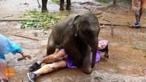 Słonik próbuje zaprzyjaźnić się z turystką i domaga się czułości