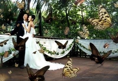 Ślub w rezerwacie dzikiej przyrody w Singapurze? Czemu nie... /arch. AFP
