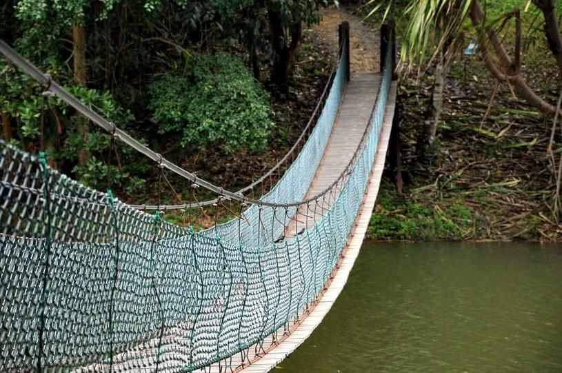 """""""Śmierć w Amazonii. Nowe eldorado i jego ofiary"""" /123RF/PICSEL"""