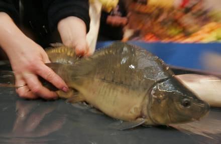 Sobotnia impreza w Gdyni skierowana jest głównie do smakoszy ryb. /AFP