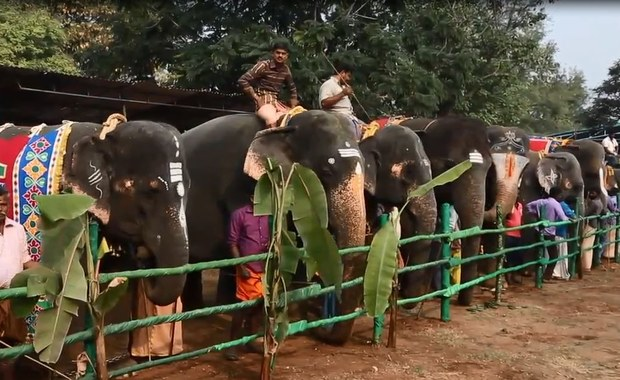Spa dla słoni. Będą zajadać się smakołykami i zażywać kąpieli