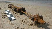 Spacerowicz znalazł na plaży karabin. Okaz ma aż 1,2 m długości
