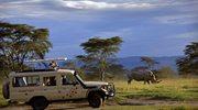 Spacerując w stadzie w Kenii