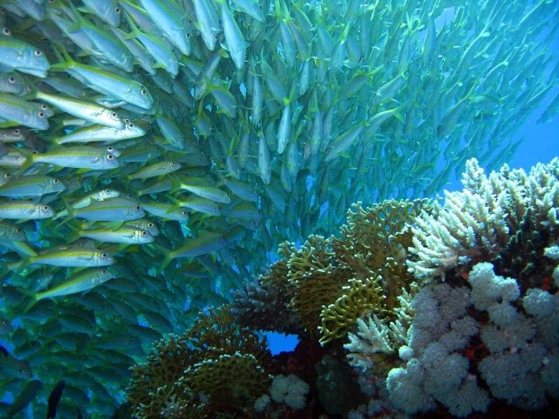 Spadająca ilość tlenu w oceanach to zła wiadomość dla wszystkich organizmów morskich /©123RF/PICSEL