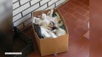 Śpiące koty jest w stanie obudzić jedynie... wysypujące się jedzenie