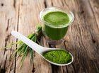 Spirulina – sproszkowane algi