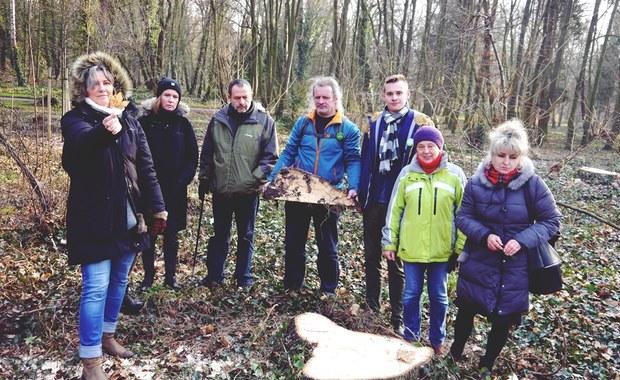 Spór o wycinkę w parku Grabiszyńskim we Wrocławiu. Zniknąć ma kilkaset drzew