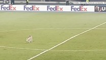 Stanął na środku boiska i czekał na pieszczoty. Pies przerwał mecz Ligi Europy