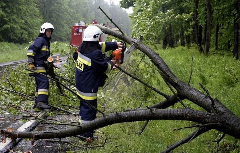 Strażacy usuwają drzewo, które wiatr powalił na drogę krajową nr 77 w Tryńczy /Darek Delmanowicz /PAP