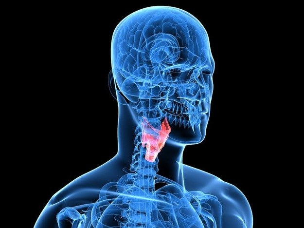 Struny głosowe wyhodowane w warunkach laboratoryjnych - to jest już możliwe /123RF/PICSEL