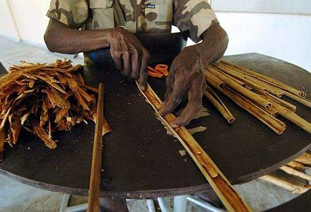 Substancja zawarta w cynamonie niszczy wątrobę /AFP