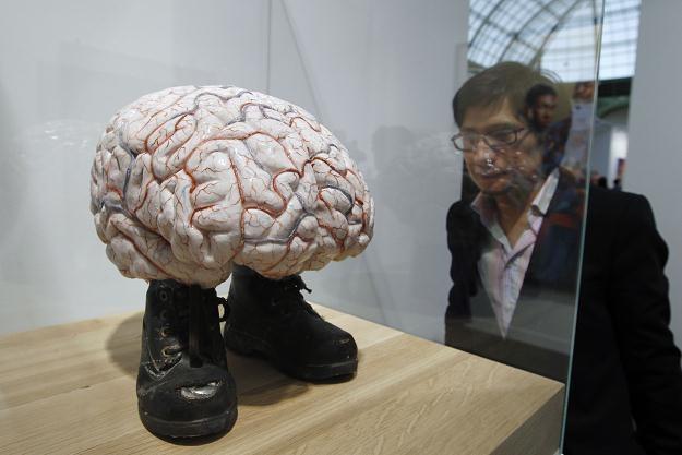 """""""Świat, który widzimy, jest konstruowany przez nasz mózg"""" /AFP"""