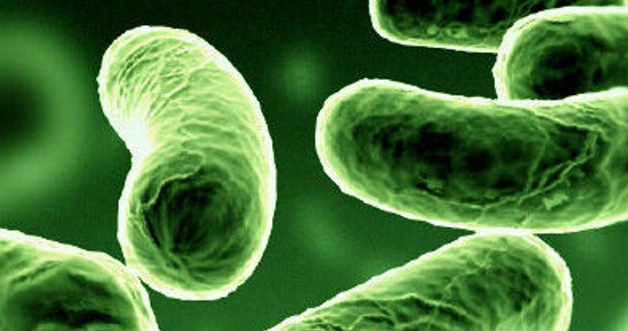 Świecące bakterie na państwowej posadzie
