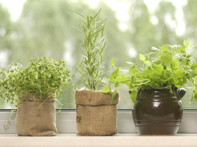 Świeże zioła są skuteczniejsze od suszonych i ładniej pachną  /© Bauer