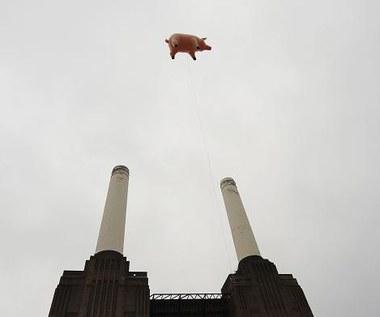 Świnia Pink Floyd znów lata
