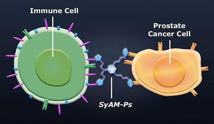 SyAMs - nowa technika walki z nowotworami /materiały prasowe