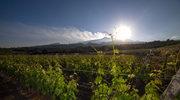 Sycylia - kontynent wina