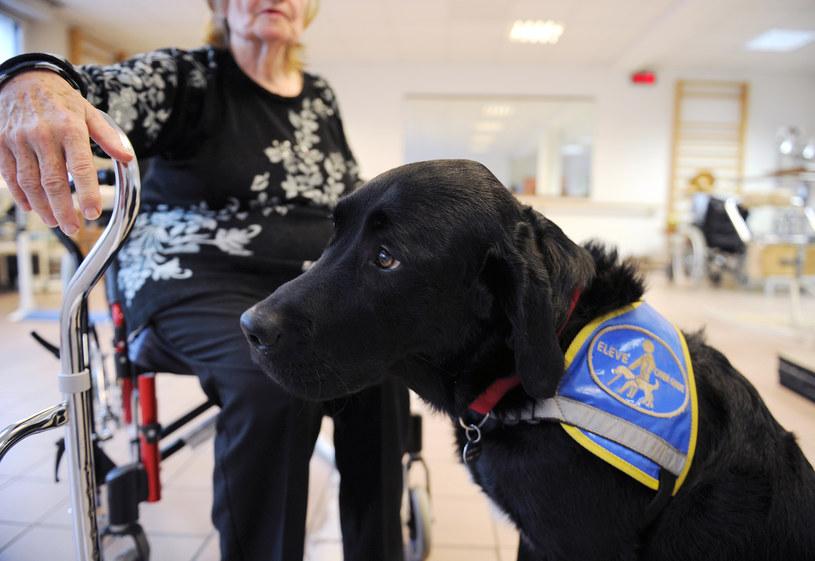 System FIDO ma umożliwić łatwiejszą komunikację z psami /AFP