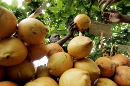 Szansa, że przyczyną śmierci będzie orzech kokosowy to 1 do 250 milionów /AFP