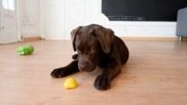 Szczeniak, który pokochał smak cytryny