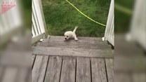 Szczeniak próbuje wejść po schodach