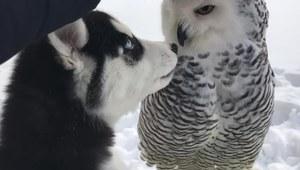 Szczeniak uwielbia sowę!