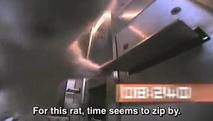 Szczury i narkotyki