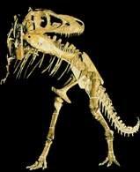 Szkielet dinozaura /Encyklopedia Internautica